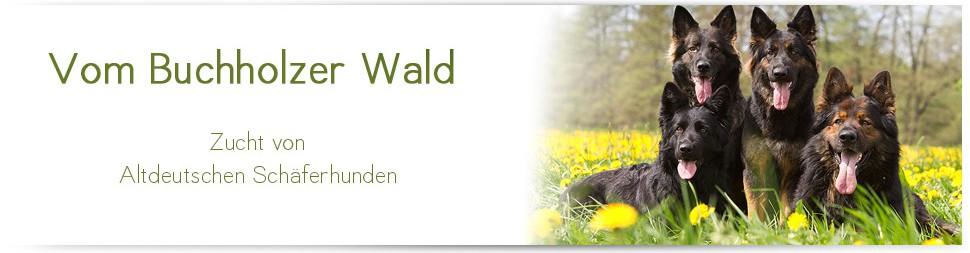 Altdeutscher Schäferhund vom Buchholzer Wald